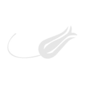 Turk Hava Yolları – THY – Lale Motifi Logo